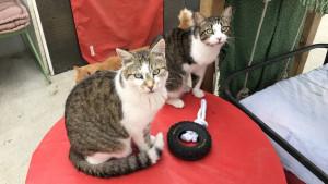 Psi i mačke: Zašto su Francuzi