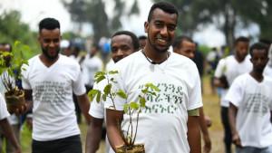 Pošumljavanje: Da li je Etiopija zasadila 350 miliona sadnica za jedan dan