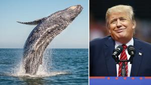 """Donald Tramp kaže da je upoznao """"Princa od kitova"""" i internet je oduševljen"""