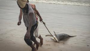 Afrika, životinje i zaštita prirode: Kako su ajkule u Kongo-Brazavilu postale ugrožene