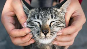 Kako da bolje razumemo mačke i ono što žele da nam poruče?