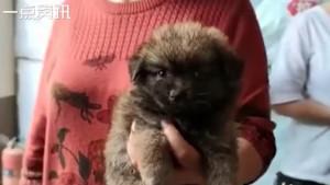Kina i životinje: Misteriozna kutija za pse i mačke izazvala bes