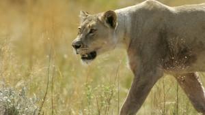 Fotografije sa safarija naterale šefove supermarketa da podnesu ostavku