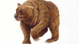 Ljudi su odigrali bitnu ulogu u izumiranju pećinskog medveda, tvrde naučnici