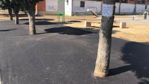 Drveće u asfaltu zapanjilo građane: Sve što je nenormalno kod nas je postalo normalno