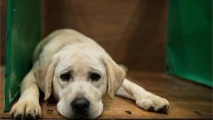 Hranilice za pse u Tuzli: Koštaju kao jedna nadogradnja noktiju