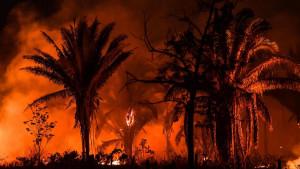 Požari u Amazoniji: Najviše vatre u poslednjih 13 godina