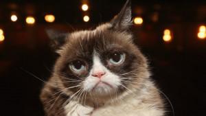 Zbogom Grampi: Uginula legendarna mačka sa interneta