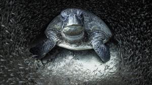 Životinje i fotografija: Ovako izgleda život u okeanima