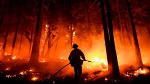 Požari u Kaliforniji: Borba sa vatrenom stihijom - džinovske sekvoje obmotane prekrivačima otpornim na vatru
