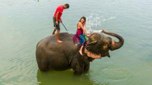 Korona virus, Azija i turizam: Organizatori safarija prodaju slonove da bi sastavili kraj s krajem