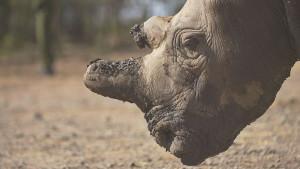 """Izmiranje vrsta kao """"tihi ubica"""