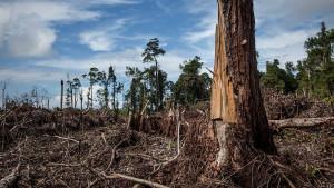 Palmino ulje: Može li svet da se odrekne ovog proizvoda da bi spasao prašume