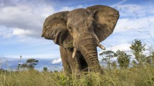 Najmanje 55 slonova uginulo zbog suše u Zimbabveu
