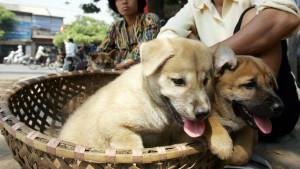 Vijetnam traži od stanovnika Hanoja da ne jedu pseće meso