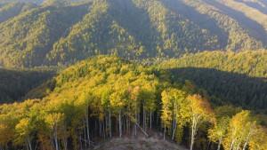 Rumunija i smrt rendžera: Borba protiv seče šuma uzima danak
