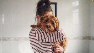 Španija i kućni ljubimci: Sud odlučio - partneri dele starateljstvo nad psom