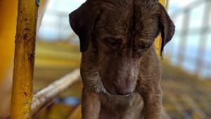 Tajland: Spasili psa vode 220 kilometara od obale