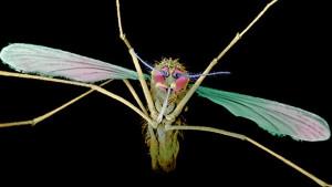 Pronađen novi lek za malariju -