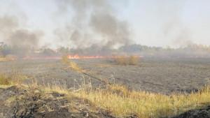 Požar u rezervatu prirode Carska bara: Šta smo izgubili