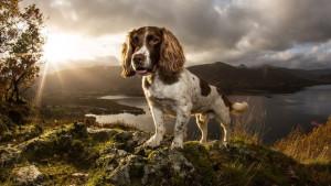 Kućni ljubimci: Šetnja sa psom u prirodi - lek za tmurnu svakodnevicu