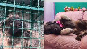 Ko su volonteri iz Velike Britanije koji brinu o životinjama u Srbiji