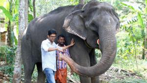 Najstarija slonica preminula u 88. godini