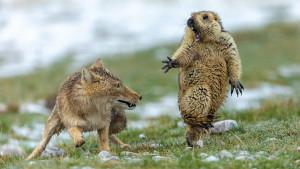 Najbolje fotografije iz životinjskog sveta