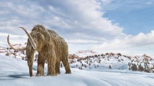Klimatske promene i nauka: Možemo li da vratimo mamute da nam pomognu