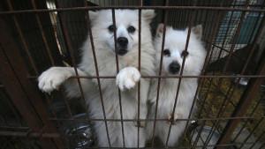 Južna Koreja i životinje: I predsednik za zabranu ishrane psećim mesom