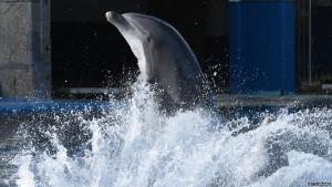 Smrt bebe delfina u bugarskom parku: