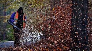 Duvači za lišće smrtonosni za insekte, upozoravaju Nemci