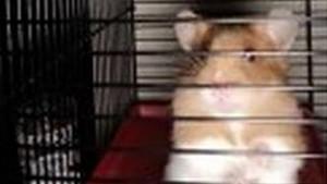 Oslobađanje hrčka: Bacili mu sićušne merdevine da se popne