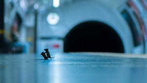 Fotografije divljeg sveta: Prva nagrada za borbu miševa oko hrane