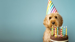 Pas i godine: Kako da izračunate koliko je stvarno star vaš ljubimac