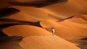 Korona virus: Kako je pandemija uticala na zaštitu prirode