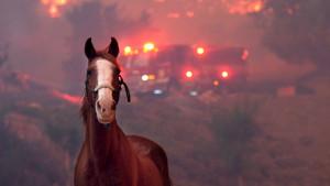 Foto priča iz Kalifornije: Životinje u vatrenoj stihiji
