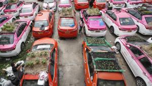 Korona virus i Tajland: Na krovovima propalih taksi vozila uzgaja se hrana za vozače koji su ostali bez posla