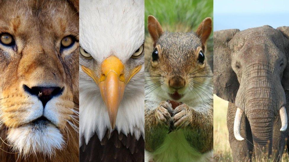 """Super orlovi, lavovi sa Atlasa i pustinjske lisice - Upoznajte """"životinje"""" koje se takmiče na Afričkom kupu nacija"""