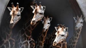 Životinje: Fascinantni načini na koje različite vrste vide brojeve i kako im to pomaže da prežive