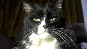 Korona virus: Ne puštajte mačke napolje, savetuju veterinari
